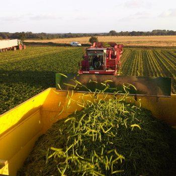 farming 2